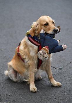 dog theresa may